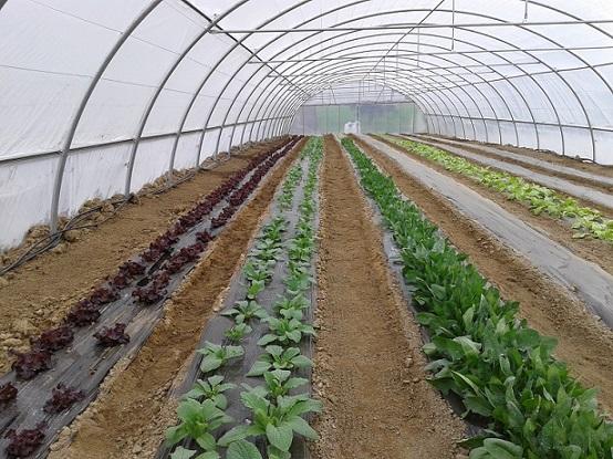 tunel de cultivo
