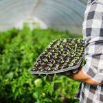 Encuentra los mejores planteles ecológicos para tu Huerto o Jardín en hortiaroma