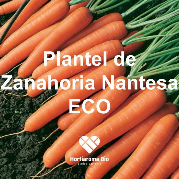 Plantel de Zanahoria Nantesa ECO